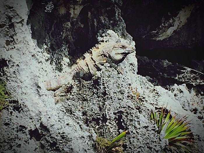 FindMyFriend Nature Mexico