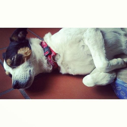 È ora di fare la ninna. 100happydays Pet Petoftheday Dogs dog doglife Ilovemydog photography photooftheday picoftheday igersItalia igersAbruzzo instadaily instamood