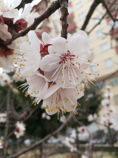 Spring Nature Tree Flowers Growth Close-up Blossom Flower Tree Springtime Beauty In Nature Twig Outdoors Flower Head Almond Tree Branch Fragility No People Pink Color Plant Day Plum Blossom Cherry Blossom