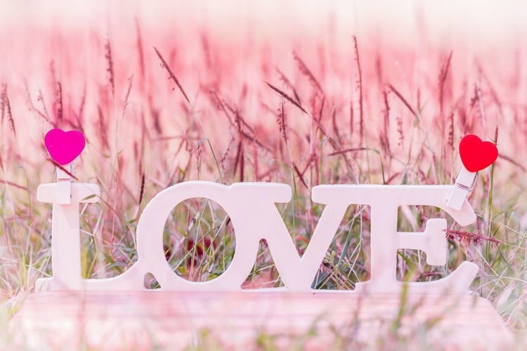 Close-up of love text by plants