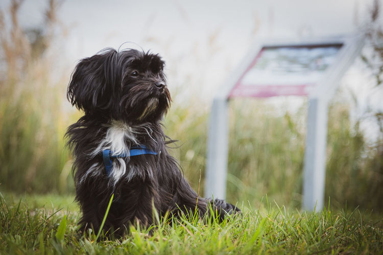 Portrait of dog on field