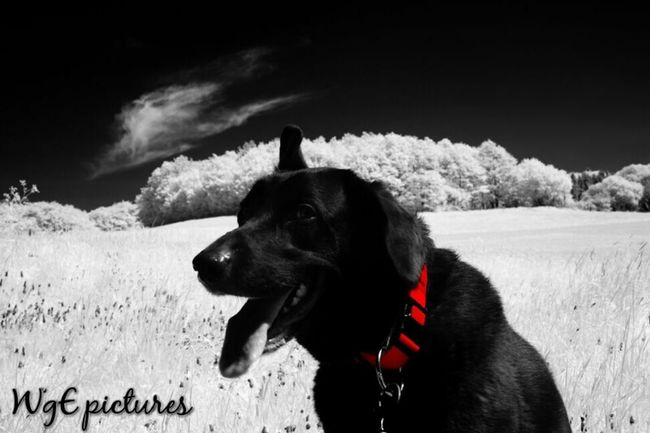 Dog Animals Ir Photography