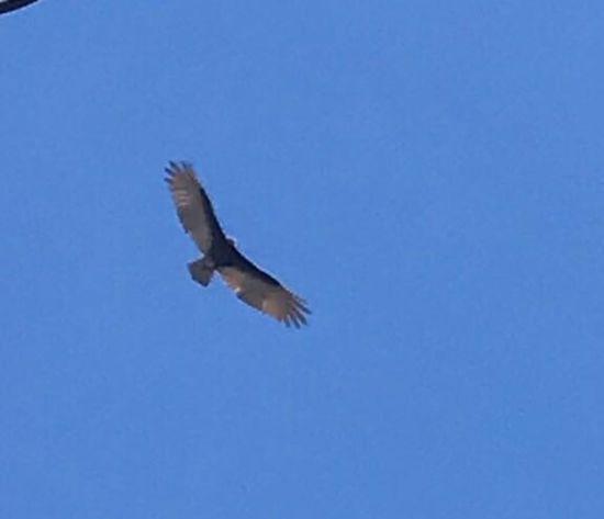 One Animal Animal Animal Wildlife Animal Themes Animals In The Wild Vertebrate Flying