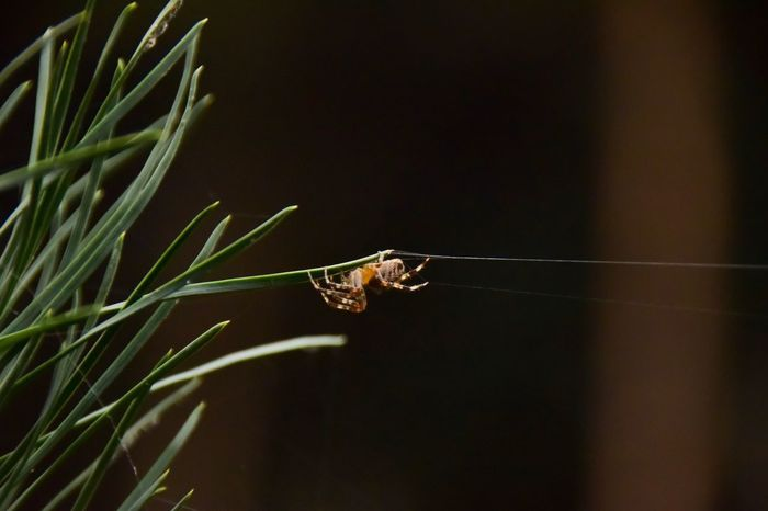 knitting artist in the forest. Animal Wildlife Beauty In Nature Nature_collection Nature Photography Spider Spider Silk Strain Animal Themes Artist Insect Outdoors Close-up Nikon