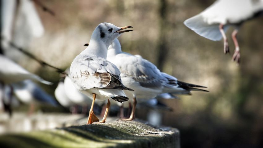 Seagull Seagulls Birds Bird Bird Photography EyeEm Birds Animal Animal Photography Animal Themes Birds In Flight From My Point Of View Colours Eyem Gallery Close Up Closeup Sony NEX Colour White Darkness And Light Summer ☀ Sunday Morning Taking Photos Holland