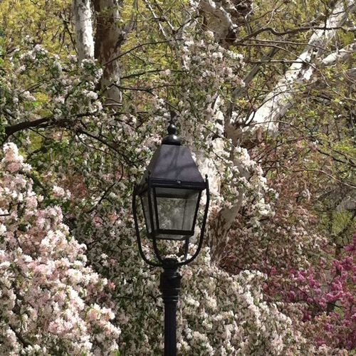A light for the flowers. NY NY. Tomaca Tomacag Tomacaphotos Nature