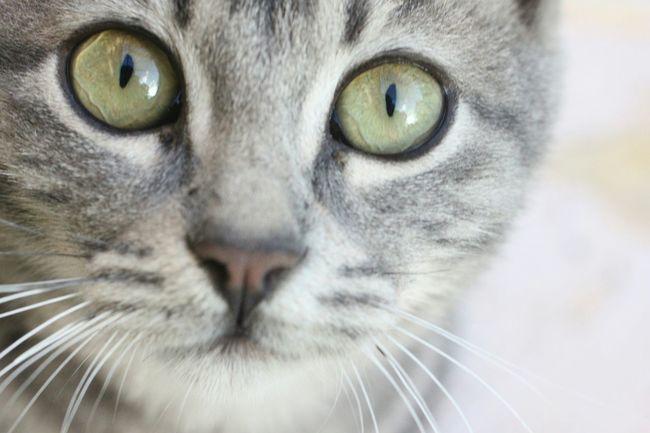 My lovely cat ♡