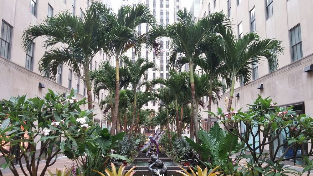 Palm Tree Island Palm Trees Exotic Flowers Discover Your City 5th Avenue Newyorkcity