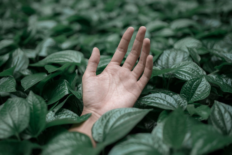 Body Part Close-up Finger Green Color Growth Hand Human Body Part Human Finger Human Hand Human Limb Leaf Leaves Nature One Person Personal Perspective Plant Plant Part Real People Selective Focus Touching Unrecognizable Person EyeEmNewHere