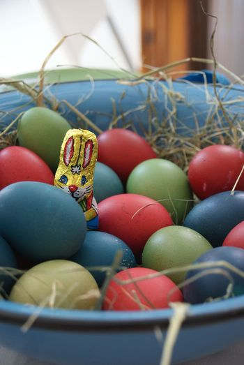 Depth Of Field Easter Bunny  Easter Eggs Ostern