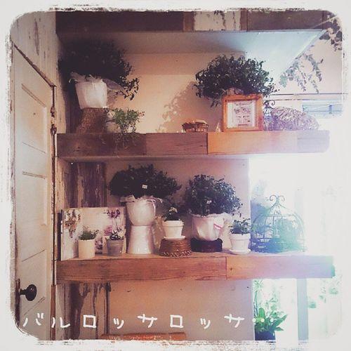 警固にある バルロッサロッサ 鉢植えもおしゃれで、落ち着く店内~(*^^*) 福岡 警固 バルロッサロッサ ハル カフェ Cafe おしゃれな店内 鉢植え 素敵