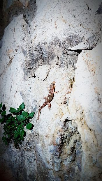 Textured  Backgrounds Full Frame Close-up Abstract No People Day Nature Outdoors Architecture Lizard Nature Lizard Nature Lizard Climbing Down A Wall Reptile Animals In The Wild
