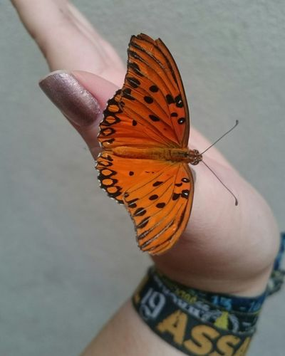 Close-Up Of Butterfly Perching On Woman Hand