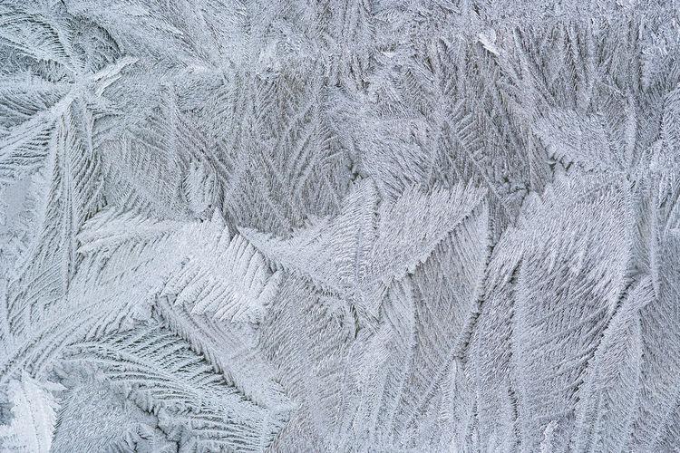 Full frame shot of snow covered leaves