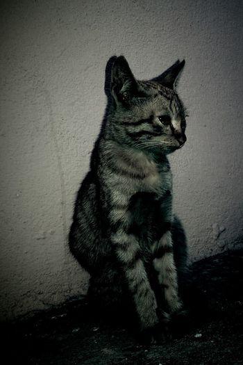 Cat Close-up Vintage Catgod Domestic Cat Leopard Print Domestic Animals Day