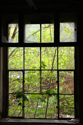 Abandoned Places City Cityscape Green Green Green Green!  Green Color Silhouette Abandoned Adventure Architectural Feature City View  Close-up Day Frame Garden Green Color Indoors  Lostplaces Nature No People Symmetry Tree Window Window Frame Window View