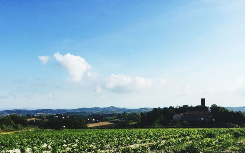 Nuvole bianche sul verde delle colline Sky Plant Cloud - Sky Field Landscape Beauty In Nature Environment Scenics - Nature Agriculture