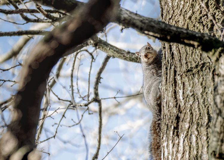 Low angle view of squirrel sitting on tree trunk