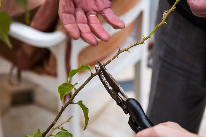 Close-up of man pruning plants