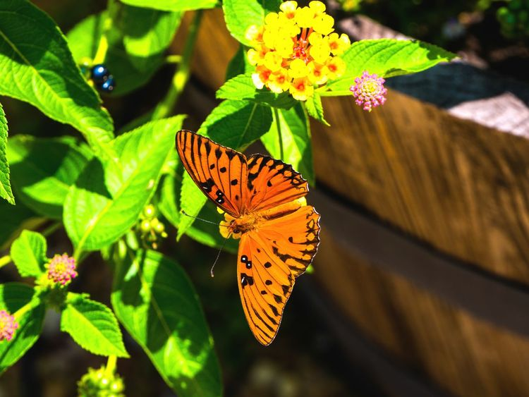 Butterfly Rest - Butterfly Flowrrs And Plants Nature Flowers And Insects Insects