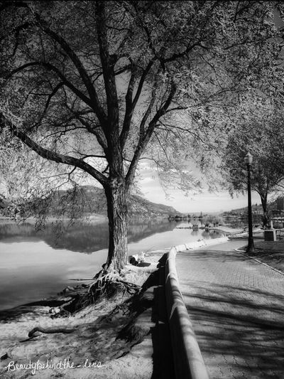 A Walk Through the Park Landscape Landscape_Collection Black And White Landscape Blackandwhite Photography Parks Pathways Black And White Collection  Blackandwhitephoto Nature Nature_collection Naturephotography Naturelover Lake View Okanaganlake Brickpathways Bnw Bnw_captures Trees Trees And Nature