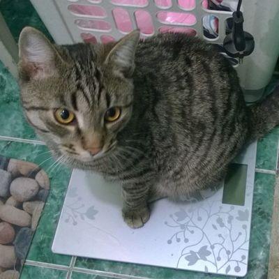 Уже почти пять кило Cat
