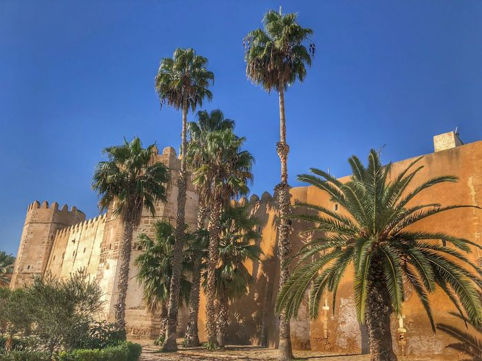 Medina #tunis #tunisia # Tree Plant Sky Architecture Built Structure Building Exterior Low Angle View Palm Tree Tropical Climate Sunlight