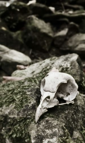 death is everywhere Skull Monochrome Nature