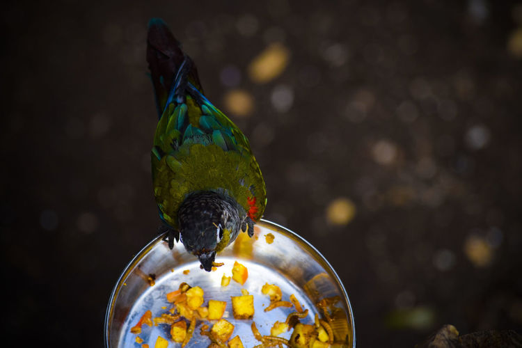 High angle view of bird eating food from container