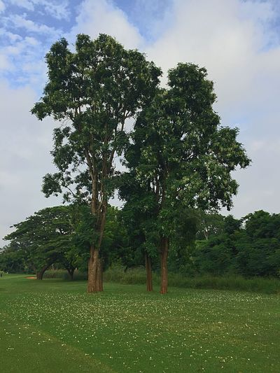 Trees Dorofoto Onefotos Eyeemghana Plant Tree Sky Field Grass Green Color Growth Land Cloud - Sky Nature Tranquil Scene Beauty In Nature Outdoors Landscape Environment