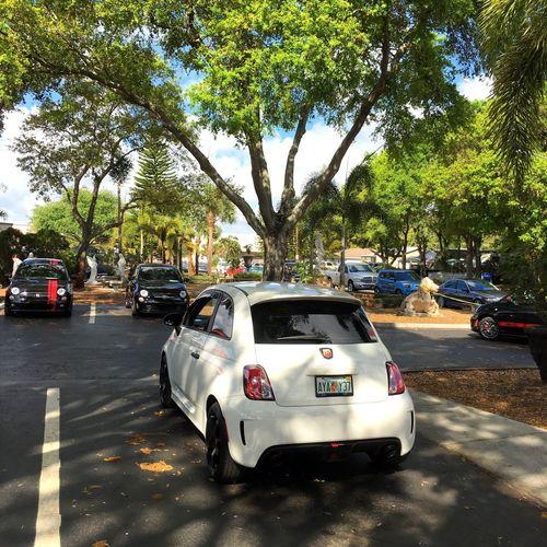 Car Transportation Land Vehicle Mode Of Transport Fiat Fiatusa Abarthgram AbarthOnly Abarth 500 NEM Submissions