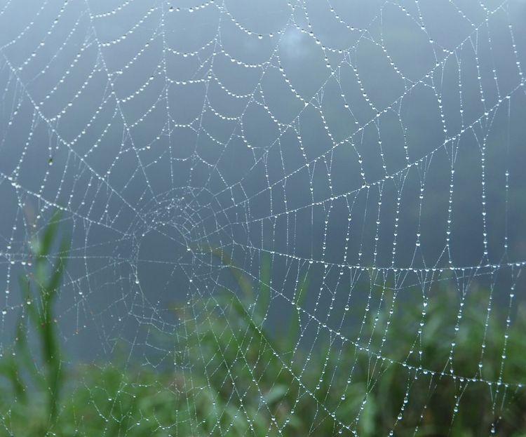 蜘蛛の巣…雨降りの中で… 信州 EyeEm Nature Lover Nature 森の風景 キラキラ 水滴 蜘蛛の巣 八ヶ岳山麓 Nagano, Japan 松原湖