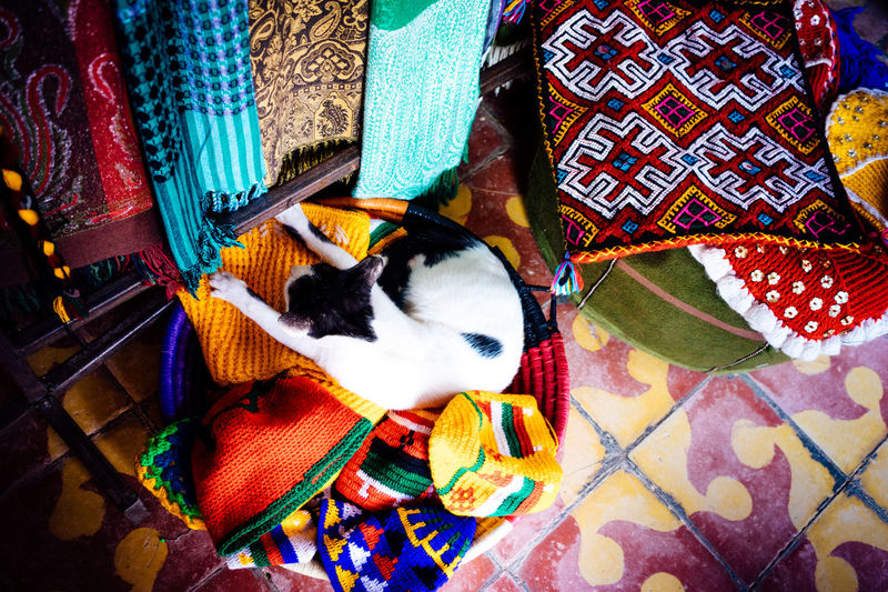 A Cat Animal Themes Cat Cats Life Clothes Shop Domestic Animals Domestic Cat Indoors  Mammal Marrakech Moroccan Moroccan Cat Moroccangirl No People One Animal Pets Shop White And Black Cat