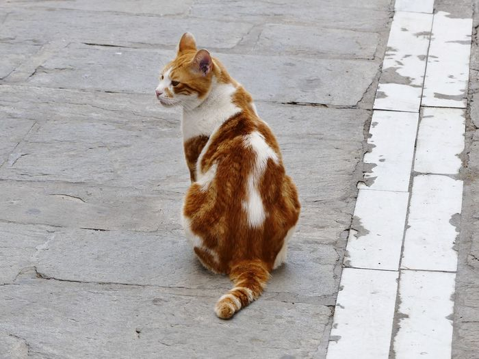 High angle view of cat sitting on footpath