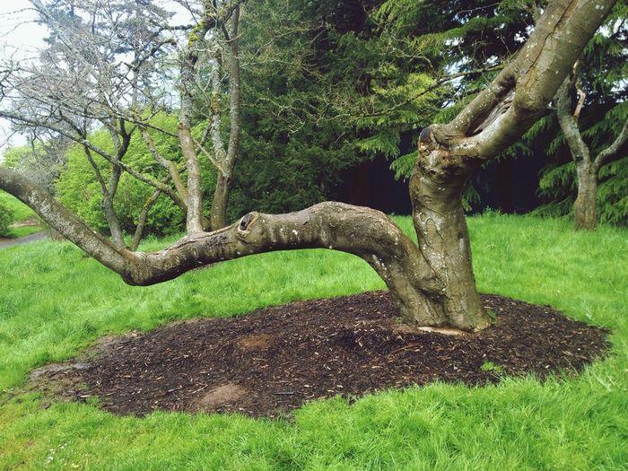Nature TreePorn Tree