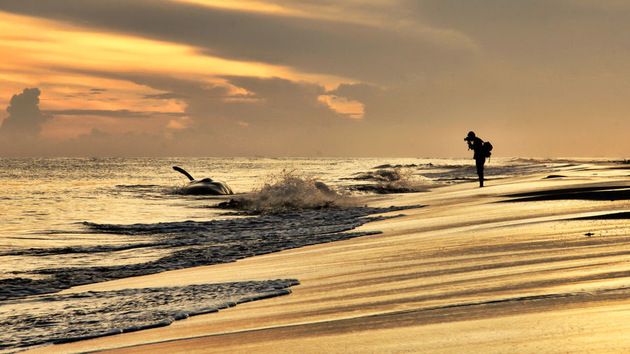 A photographer capturing a dead whale in Aceh coastal. Sea Sunset Beach Wave Sand Silhouette Water Standing