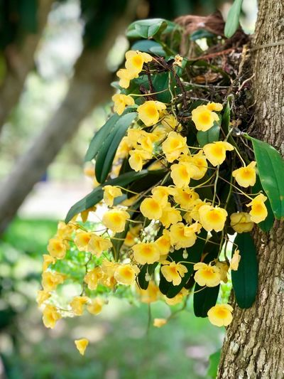 Yellow Orchids in garden day light Plant Flower Flowering Plant Fragility Vulnerability  Growth Beauty In Nature Freshness Nature Close-up Yellow Focus On Foreground Day Flower Head Inflorescence No People Petal Outdoors Sunlight Tree Trunk