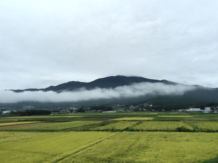 今朝の田んぼからの筑波山