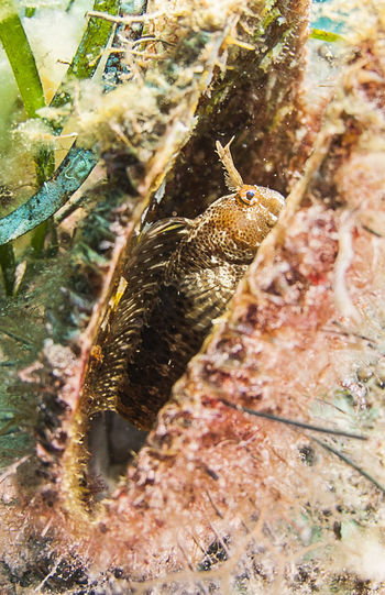 Porto Pirrone Blenniidae EyeEm Nature Lover EyeEmNewHere Animal Animal Themes Animal Wildlife Animals In The Wild Bavose Close-up Fish Group Of Animals High Angle View Insect Invertebrate Marine Nature No People Outdoors Pinna Nobilis Sea Underwater underwater photography Vertebrate Water