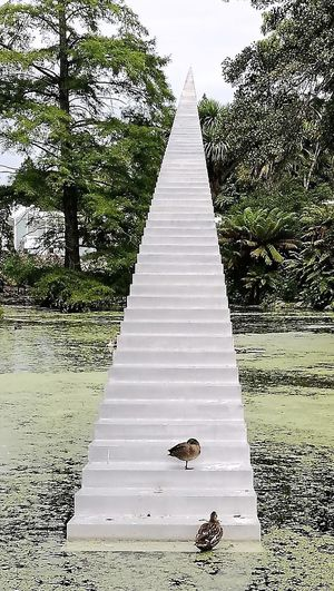 Duck On Statue No People Outdoors Statue In Pond Step Statue Steps To The Sky