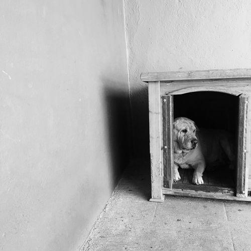 Dog Door Entrance One Animal Pets Mammal Domestic Animals Doorway Architecture Built Structure Animal Themes No People Day Indoors  Open Door The Street Photographer - 2017 EyeEm Awards