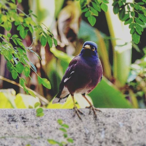 """If you want a thing done well, do it yourself."" - Napoleon Bonaparte Bird Nikon Picoftheday Photooftheday Indiapictures Storiesofindia Happiness Indianess Nature Greenery Beautiful Instagood Instagramhub Insta_mazing Nikon_photography Happytimes Throwback Bengaldiaries"