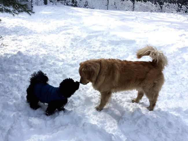 Showcase: February Doggy Love Dog Park Doggie Playdates Puppy Love And They Call It: Puppy Love Its A Dogs Life Happy Dogs Happy Dog