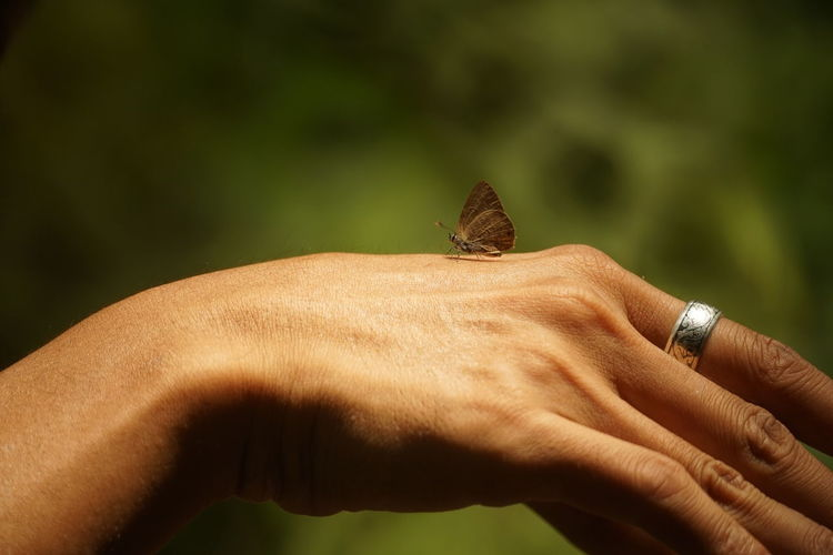 Close-Up Of Butterfly On Cropped Hand