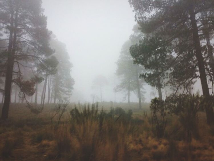 Fog Tree Nature Weather Forest Landscape Outdoors Rain Beauty In Nature Scenics Hazy  Sky Day Ajusco Mexico City Mexico Memories EyeEmNewHere