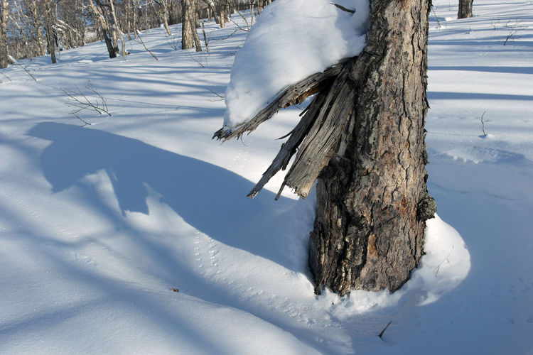 Broken tree Beauty In Nature Cold Temperature Day Nature No People Outdoors Shadow Snow Snow Textured Sunshine Tracks Trace Tree Weather Winter