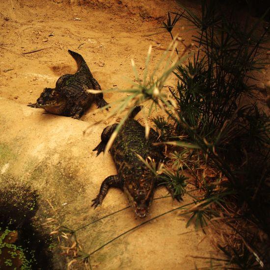 Taking Photos Zoo Animals  Mondoverde