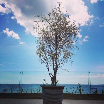 Alone...Kamerahpgw_Kupang Kamerahpgw Xtraordinarynoya