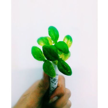 To be given :)))) Anh Đình Huy Ice Cream Leaf Given Fingers Xinh Beautiful