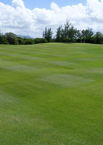 fairway of a wonderful golf course, mauritius Clouds Fairway Golf Golf Course Grass Green - Golf Course Colors Greenery Growth Landscape Lawn Lush - Description Outdoor Mauritius Natural Nature Nature Outdoors Scenics Sky Tranquil Scene Trees Île Aux Cerfs Color Life Lost In The Landscape Modern Hospitality